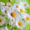 Hoe werkt  klassieke homeopathie